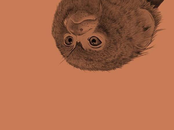 Mitz: The Marmoset of Bloomsbury, by Sigrid Nunez