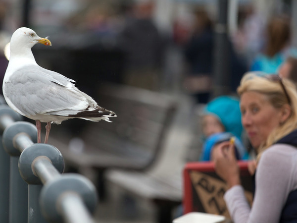 A seagull watches as people eat at a seafront in England.