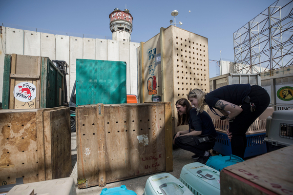 Members of Four Paws International, an animal welfare group, check on the animals at the Erez Crossing.