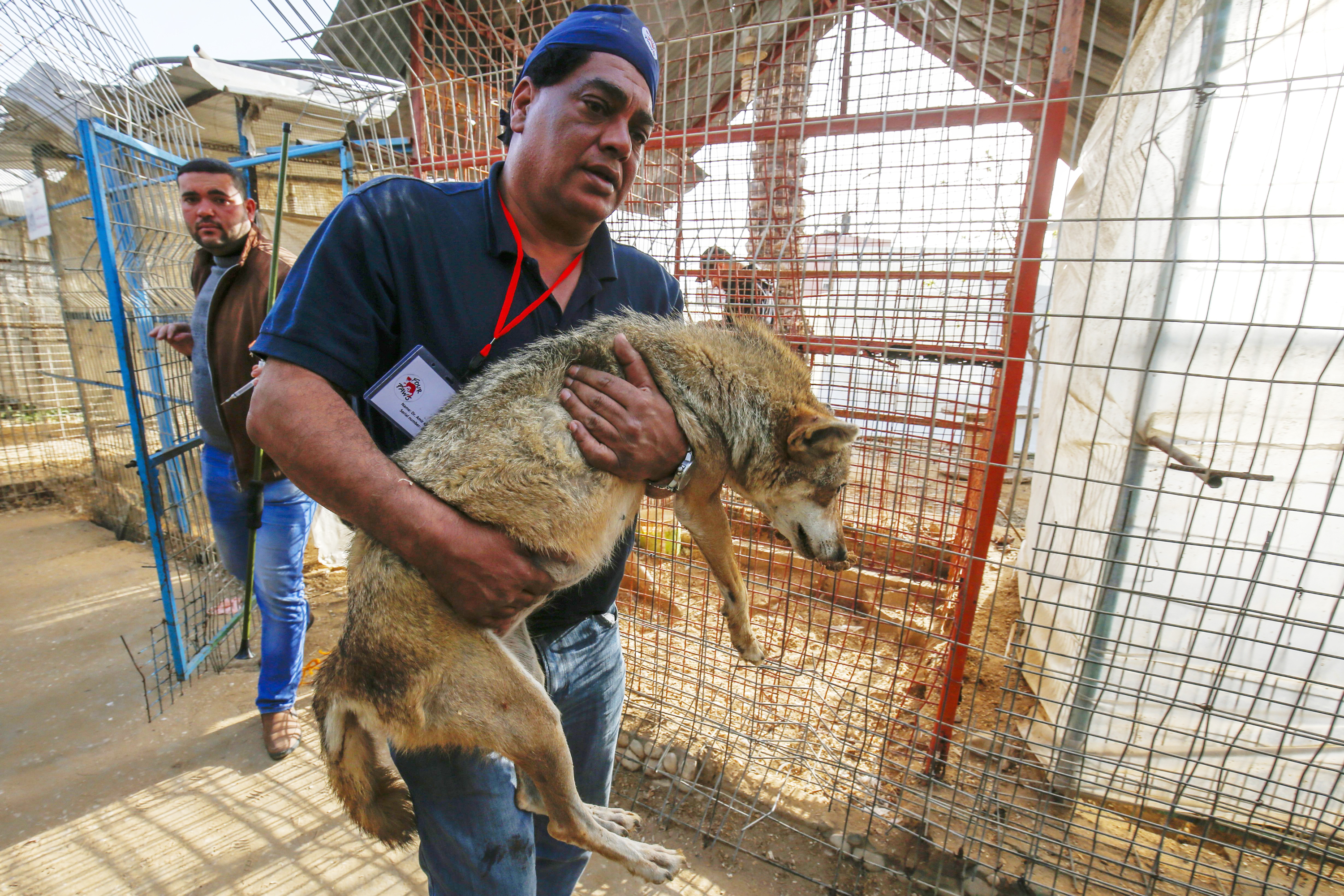 'I'm Just For Animals': The Veterinarian Who Rescues Animals From Conflict Zones