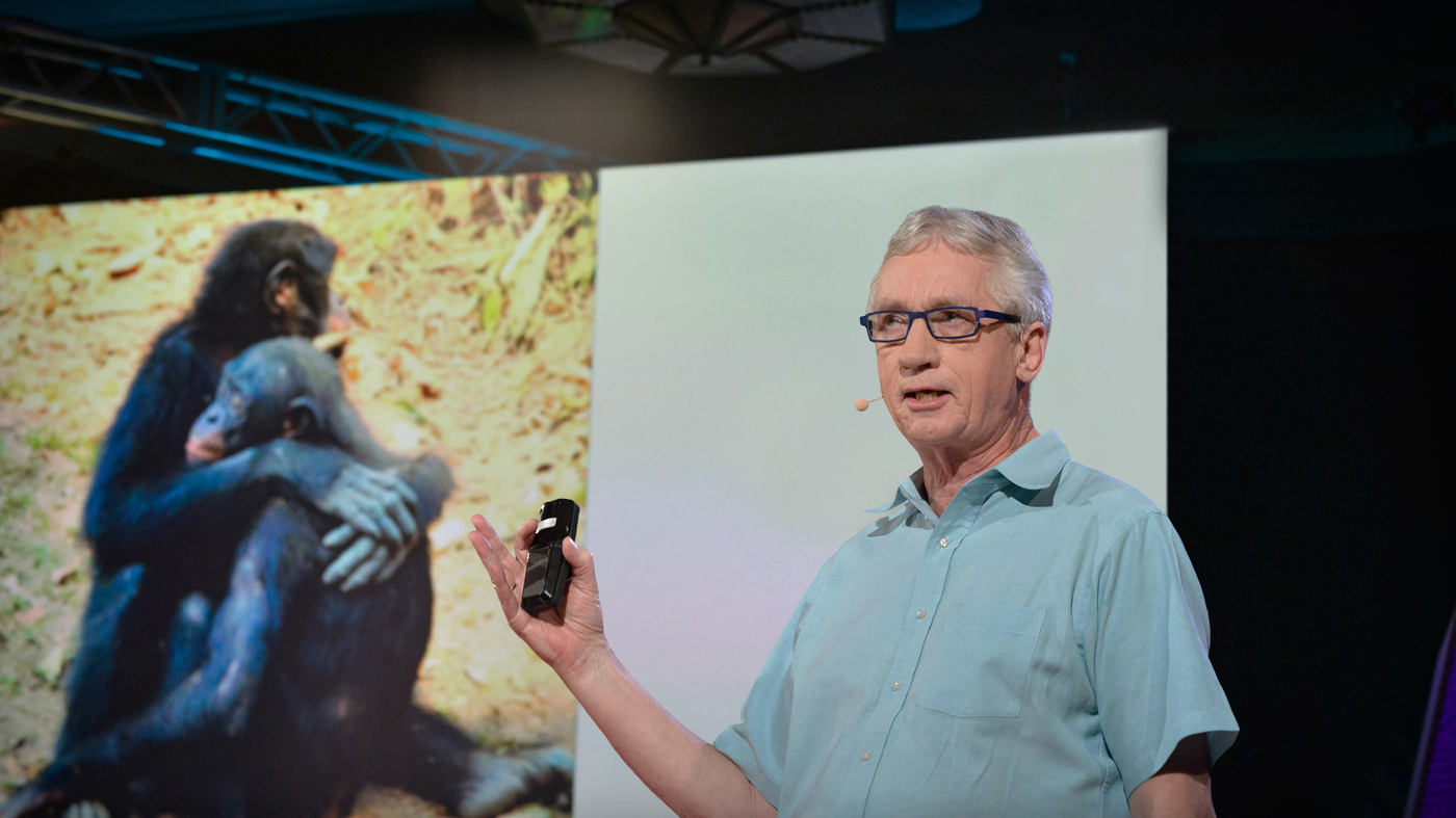 Frans de Waal: What Qualities Make A Good Leader ... In Chimpanzees?