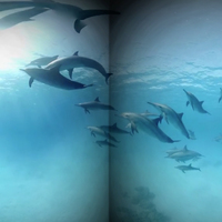 Got Pain? A Virtual Swim With Dolphins May Help Melt It Away