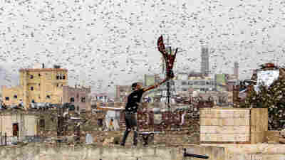 Maybe The Way To Control Locusts Is By Growing Crops They Don't Like