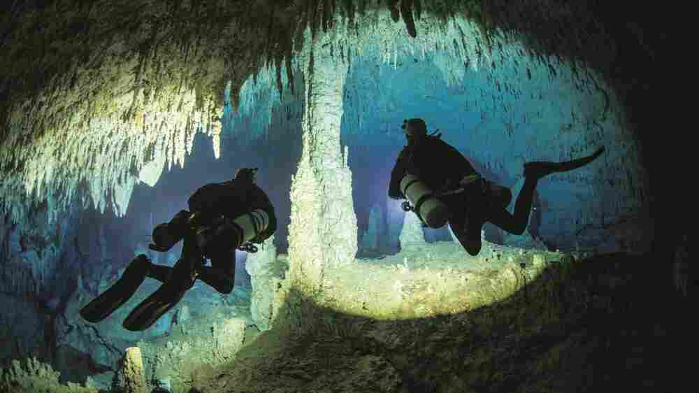 Fresh Air Weekend: Cave Diver Jill Heinerth; Character Actor Stephen Root