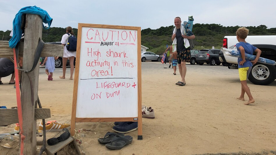 A sign warns beachgoers about sharks in the water at Newcomb Hollow Beach in Wellfleet, Mass. (Sarah Mizes-Tan/WCAI)