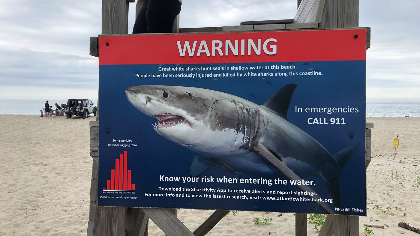 Sand, Sunscreen And     Sharks! Cape Cod Beach Towns Do More