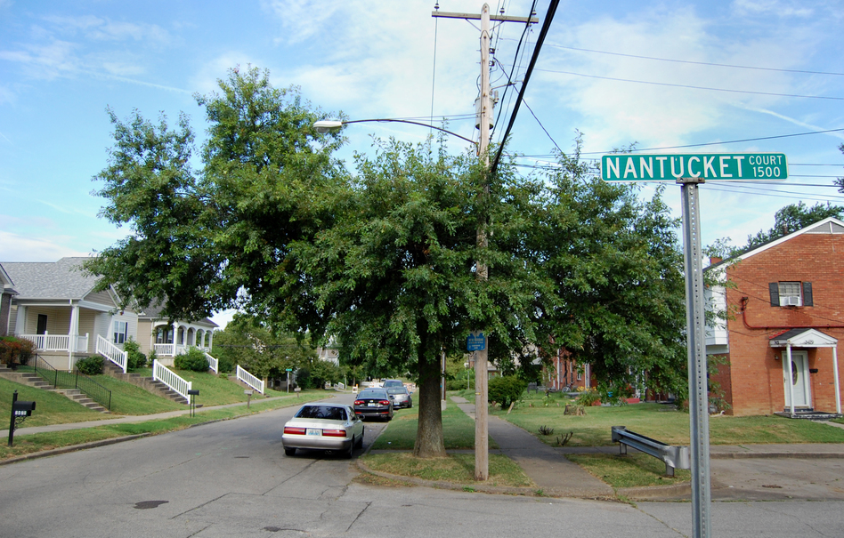 A tree grows beneath a power line in the Park DuValle neighborhood of Louisville, Ky. Urban environments can be especially harsh on trees. (Sean McMinn/NPR)
