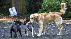 Opinion: The Real Problem At A Beltway Dog Park? Hint: It's Not The Dogs