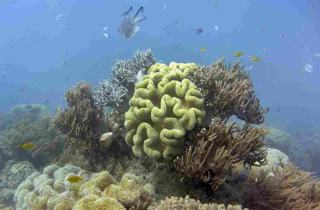 Very poor outlook for Great Barrier Reef