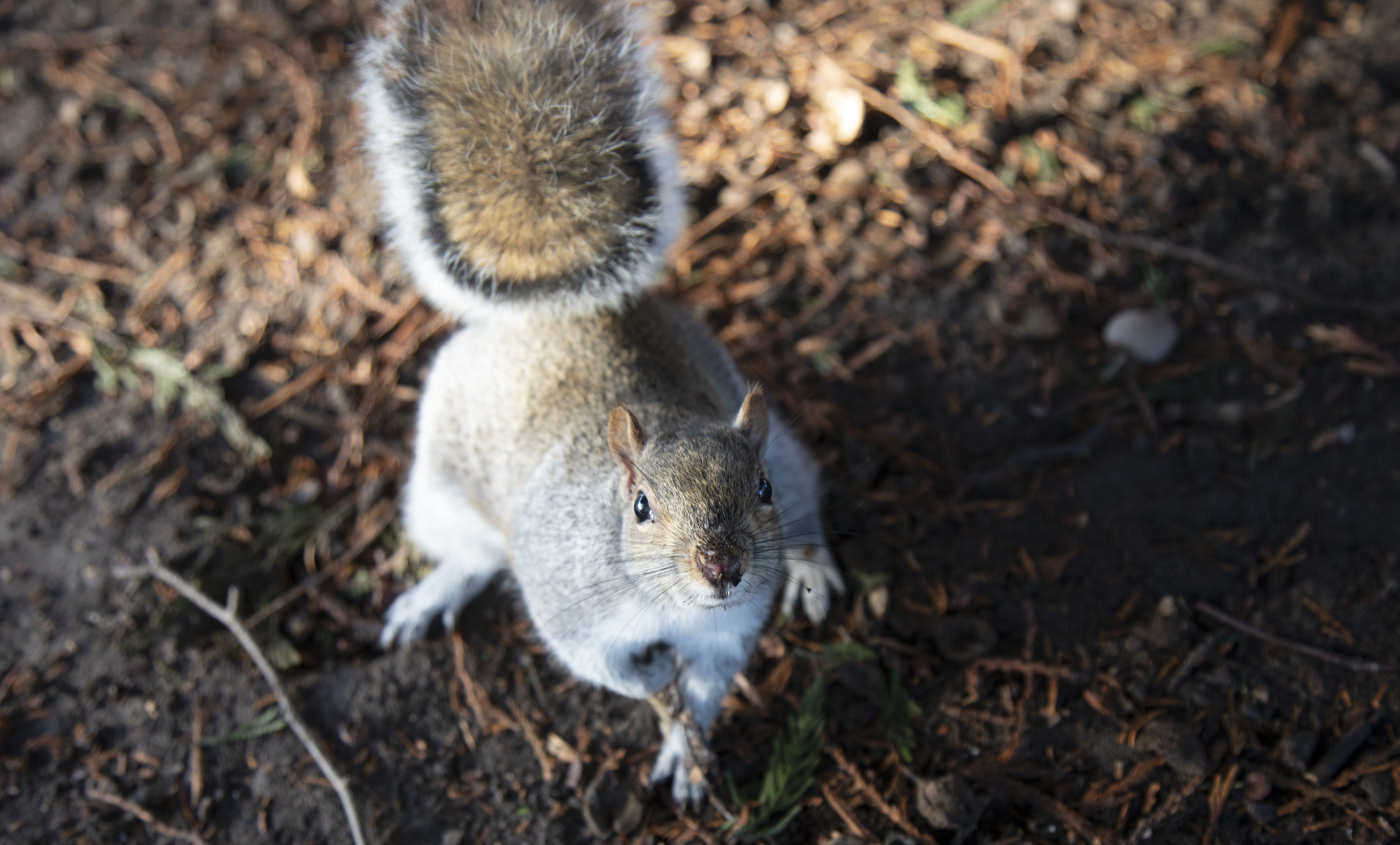 The Other Twitterverse: Squirrels Eavesdrop On Birds, Researchers Say