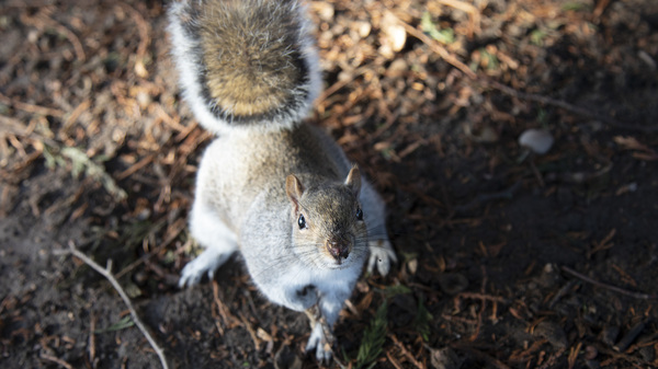 The sounds of pleasant, relaxed bird chatter made eastern grey squirrels resume foraging more quickly after hearing the sounds of a predator, researchers found.