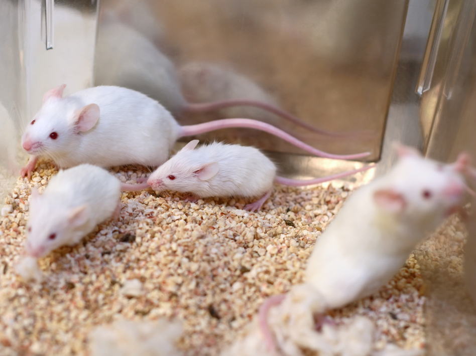The EPA says it aims to eliminate the testing of chemicals and pesticides in animals by 2035. (filo/Getty Images)