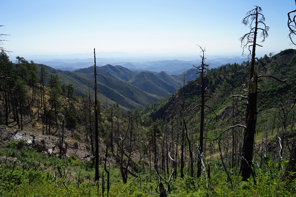 Fire damage in the Gila National Forest. Lookouts serve as eyes and as a communication link for fire crews working in the region's rugged terrain.
