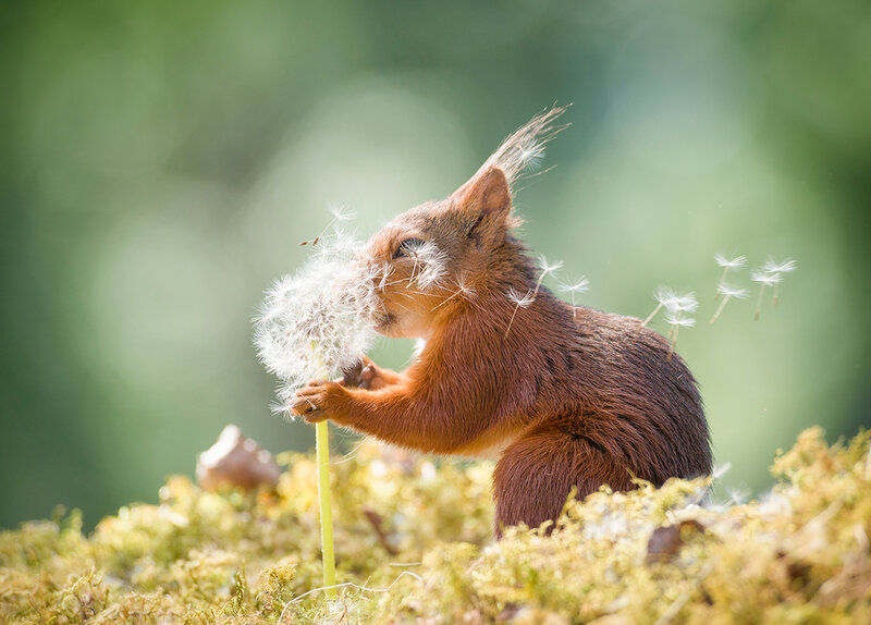 Photos Comedy Wildlife Finalists Offer Ode To Silly Serendipity Npr