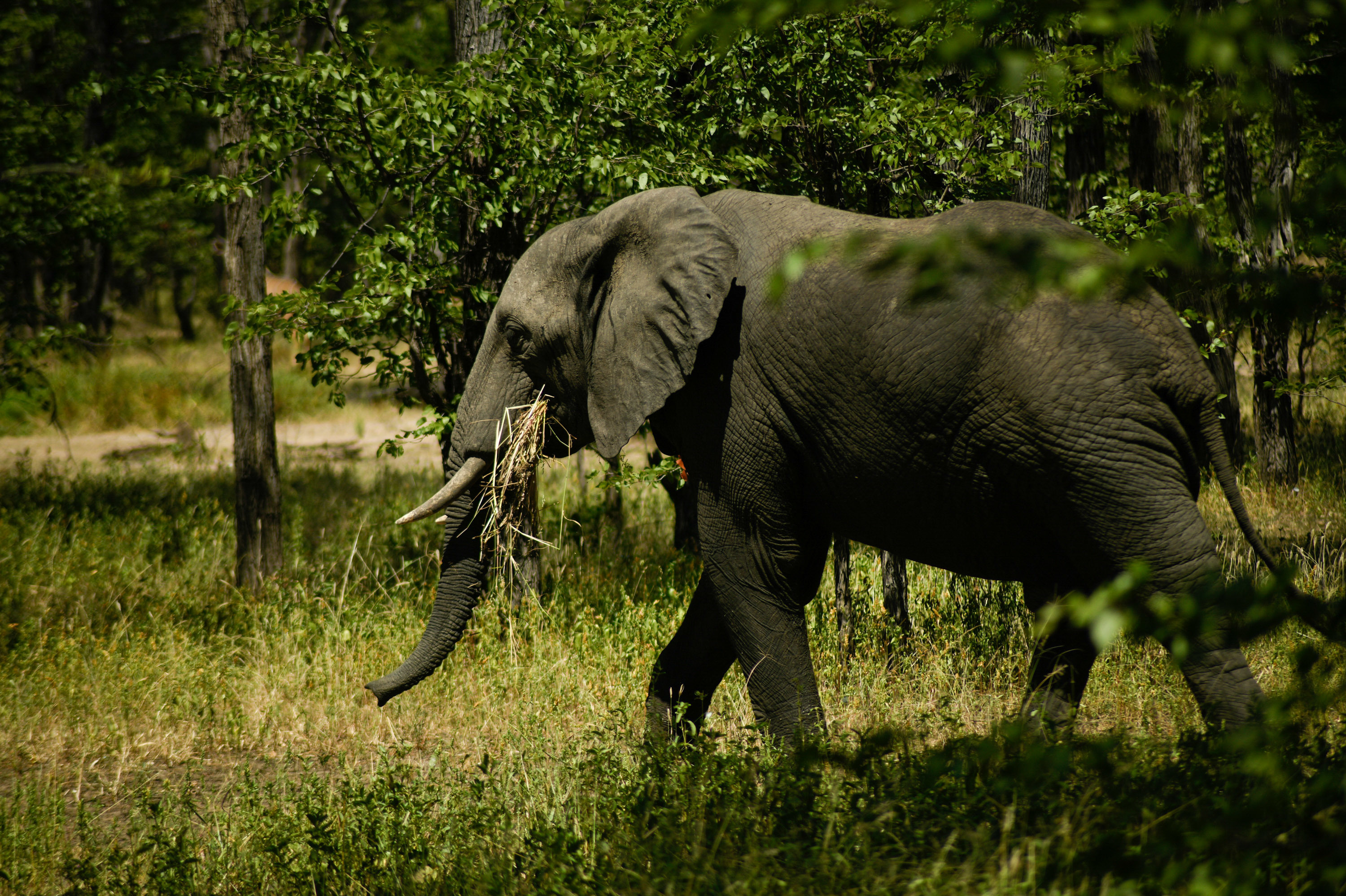 Elephants Under Attack Have An Unlikely Ally: Artificial Intelligence
