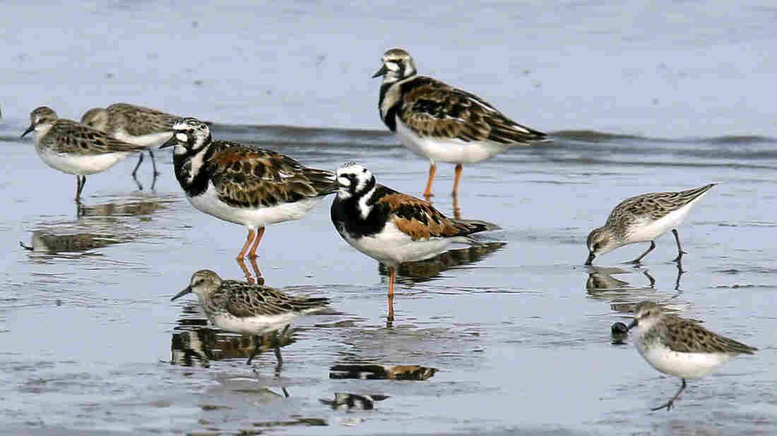 3 billion fewer wild birds in North America than in 1970