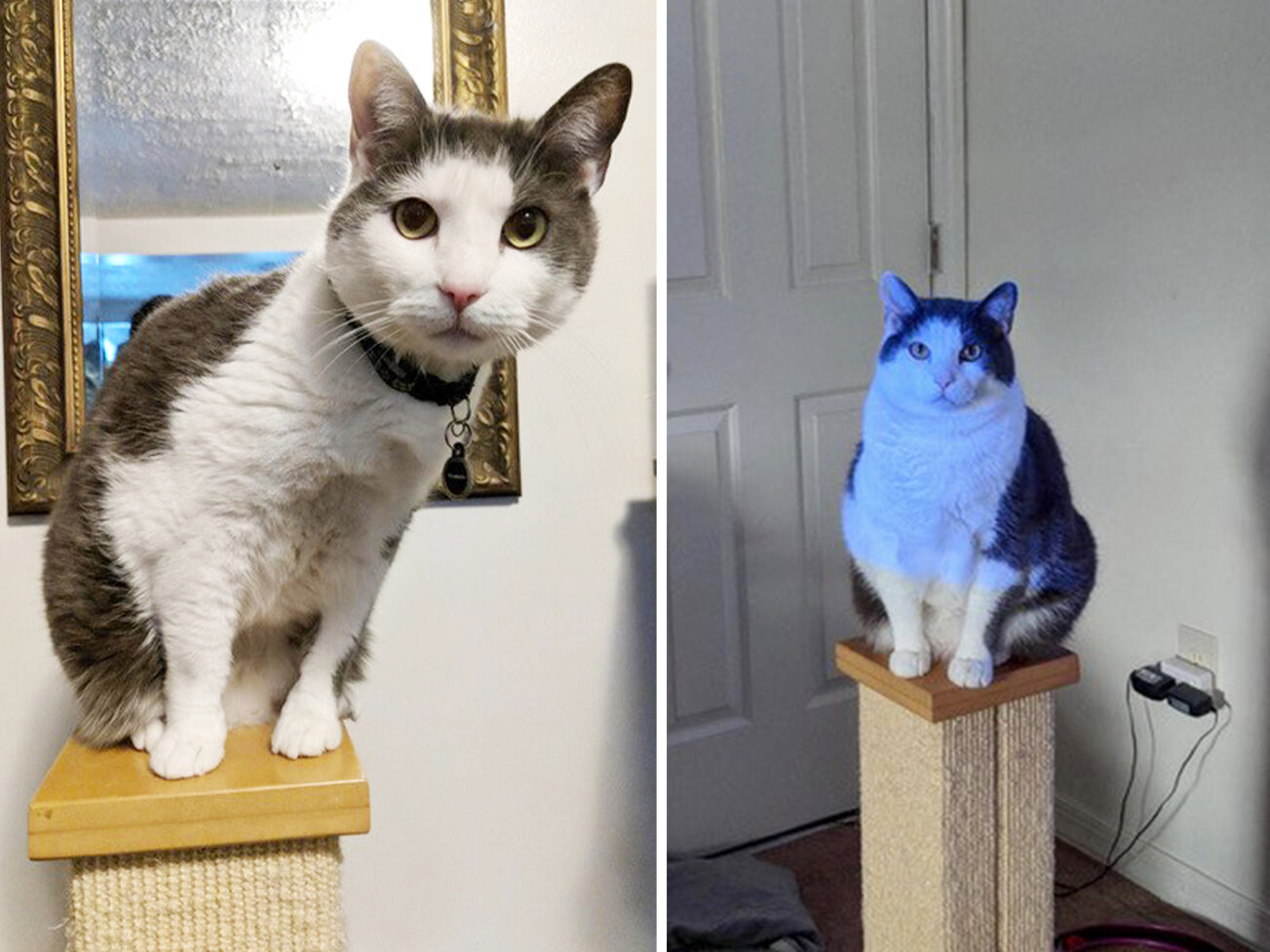 Fat Cats Losing Weight