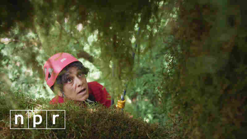 VIDEO: Tree Scientist Inspires Next Generation ... Through Barbie
