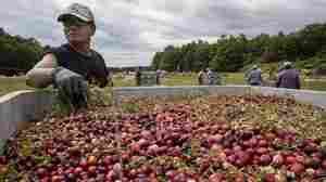 How The Trade War Crushed A Growing Chinese Market For U.S. Cranberries