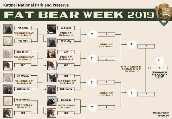 It's an Ursine March Madness —fans get to pick their favorite fat bear. Katmai National Park says Fat Bear Week increases public awareness of bears and the need for conservation.
