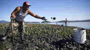 Pacific Northwest Tribes Face Climate Change With Agricultural Ancient Practice