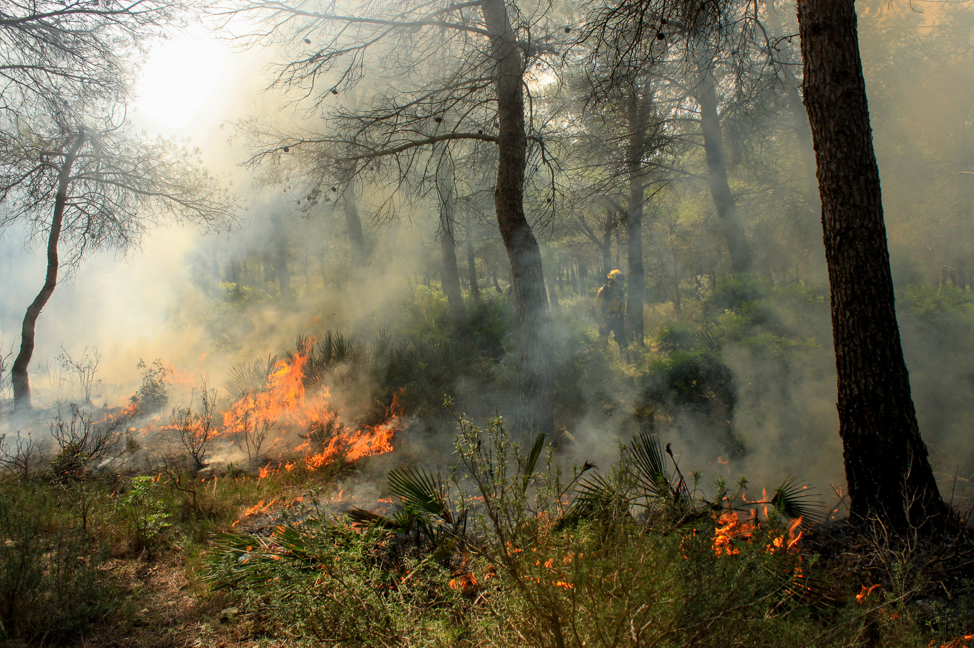 A Forest Expert Team In Spain Fights Fire With Fire — Literally
