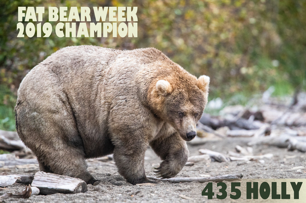 """Holly"" is the winner of this year's Fat Bear Week."