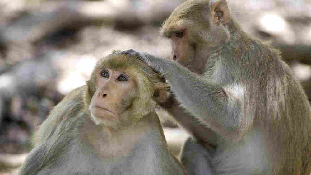 What Monkeys Can Teach Us About Being Human