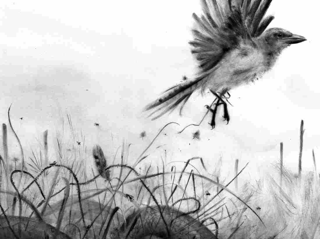 A bird tries to escape the weeds that have trapped it on the ground.