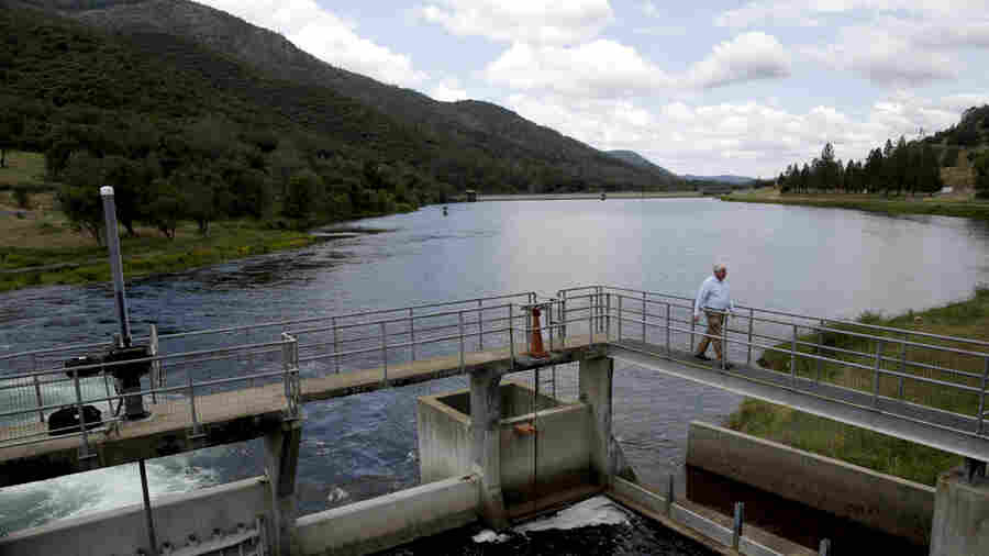 Trump Plan Weakens Protections For California Fish, Diverts Water To Farms
