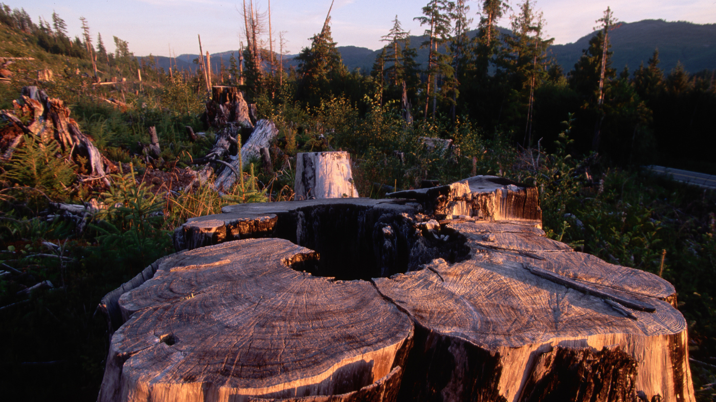 Logging 'The Lungs' of North America