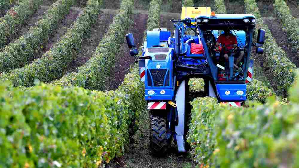 Climate Change Is Disrupting Centuries-Old Methods Of Winemaking In France
