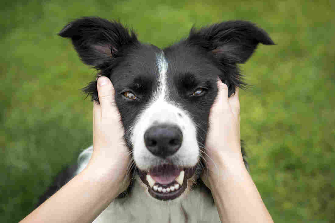 Westlake Legal Group dog-1_custom-3e61a93e7997c0648440a6bc2ad6eb5b58c6518d-s1100-c15 Dog People Live Longer. But Why?
