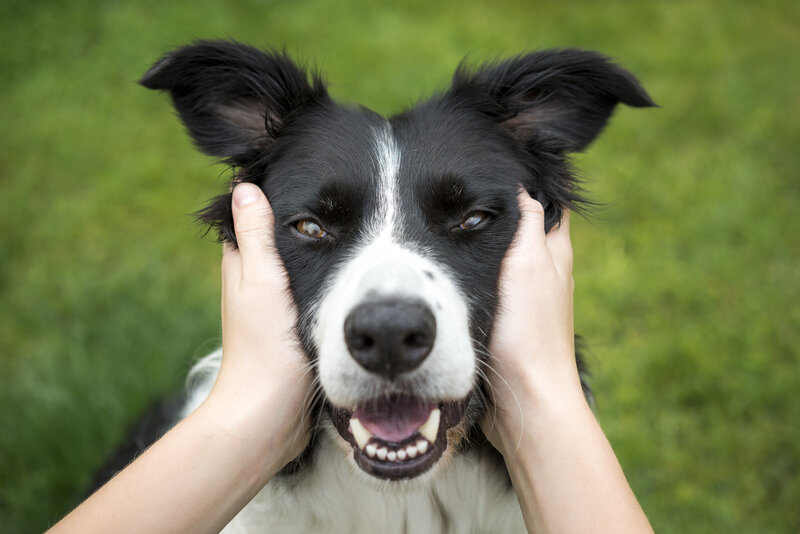 Dog People Rejoice Owning A Pup Is Good For Your Cardiovascular Health Shots Health News Npr