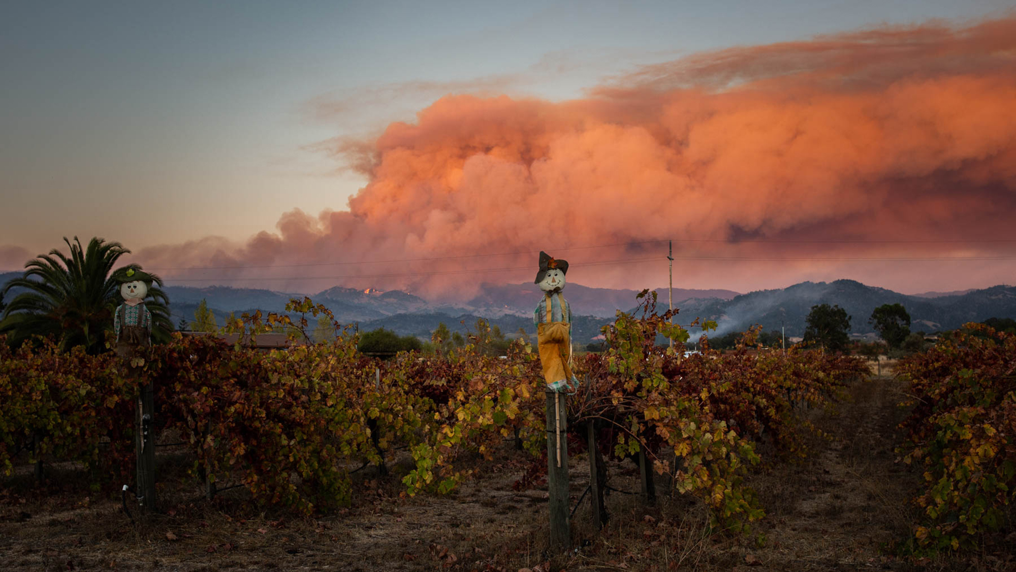 Outside of risks from the fire's heat — and any health risks related to a long-term power outage — the main health concern in wildfire conditions is smoke, which produces particulate matter that can penetrate deep into the lungs, increasing the risk of respiratory diseases and asthma, as well as heart problems.
