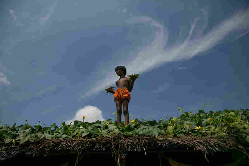 A girl collects food on her roof in Rajshahi, Bangladesh.