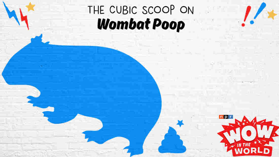 """Poop to the power of 3? Rubik's Poop? Poop cubed?! We're talking wombats and the unusually shaped blocks of scat they leave behind! But HOW? And WHY? Join Mindy and Guy Raz as they travel to an Australian """"Pooseum"""" to explore this stinky, squared, scientific mystery! It's the Who, What, When, Where, Why, How, and Wow in the World of Wombat poop!"""