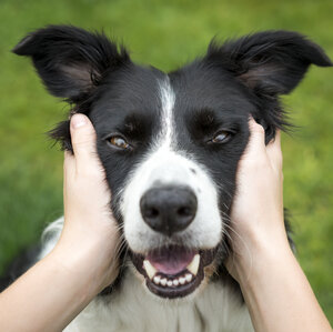 Does Your Dog REALLY Love You?
