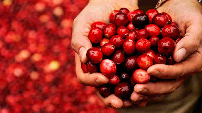 The Great Cranberry Scare Of 1959