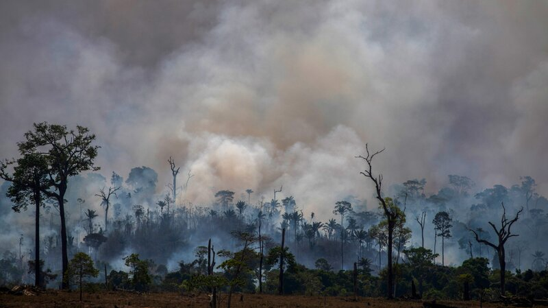 Amazon Rainforest Sees Biggest Spike In Deforestation In Over A