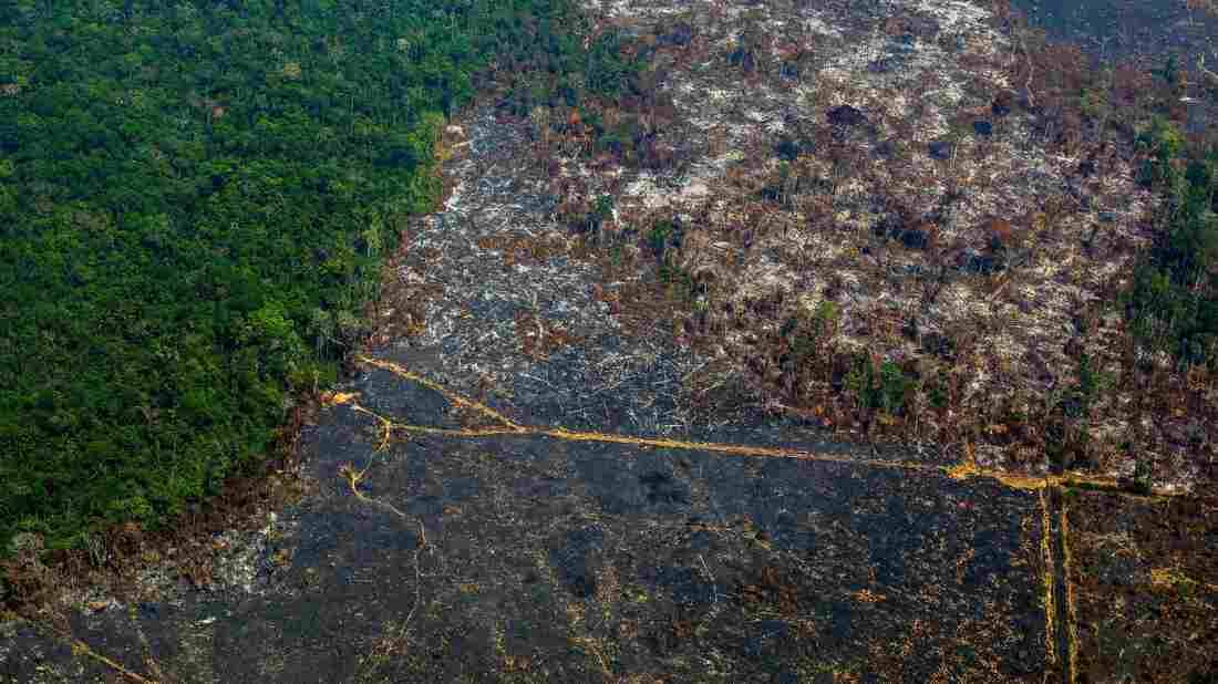 Amazon deforestation hits worst level in 11 years