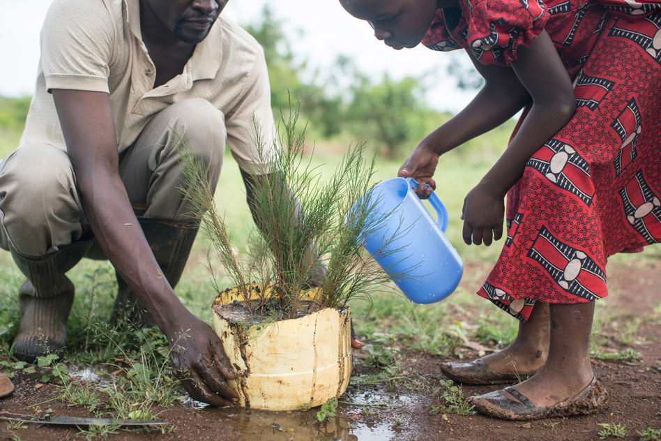 Denis Otieno and his daughter plant a cypress sapling purchased with money received from the charity GiveDirectly back in 2017. More recently, the charity teamed up with researchers to study the impact of cash grants on the wider community. (Nichole Sobecki for NPR)