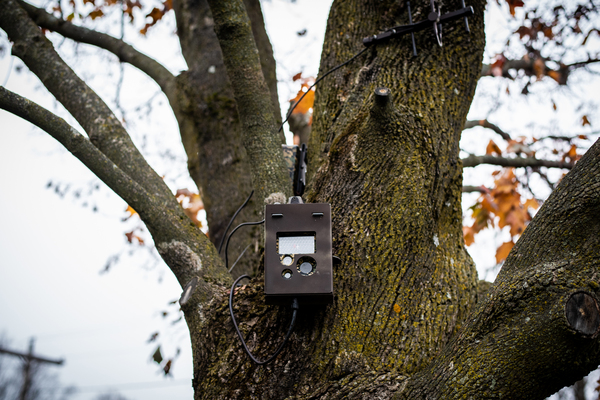 A motion triggered camera is mounted to a tree pointed toward a soft border crossing on the Haskell Free Library.