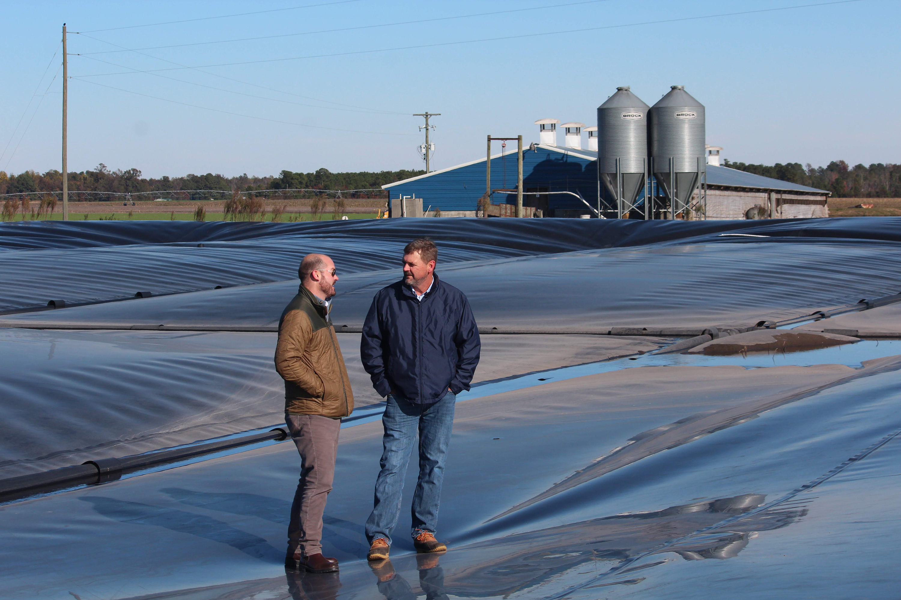 Big Companies Bet On Cleaner Power From Pig Poop Ponds
