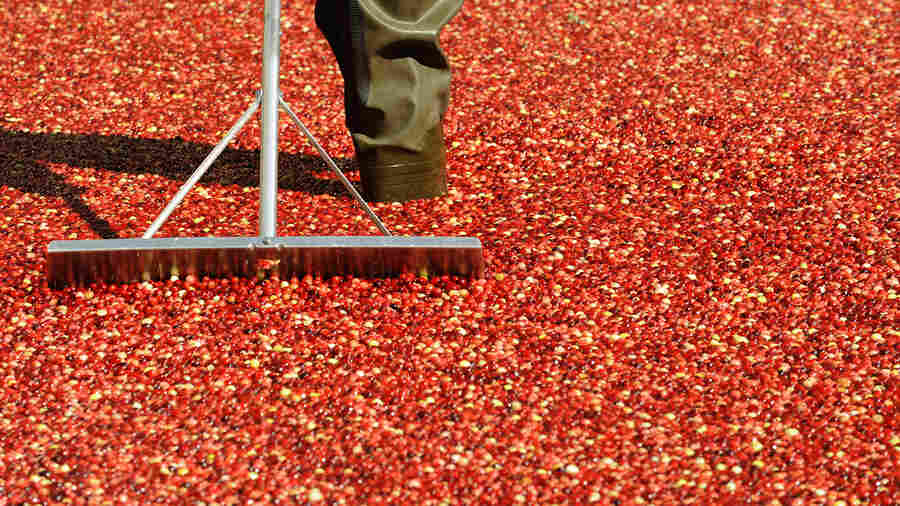 Mama Stamberg Takes Her Cranberry Relish Recipe To Ocean Spray's CEO