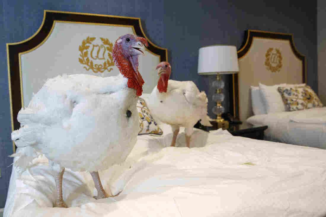 Westlake Legal Group ap_19329568262810_custom-c5cce65a090c7844462f4e7e8036c5b61a02b0d7-s1100-c15 I Beg Your Pardon: The Strange History Presidents Sparing Turkeys