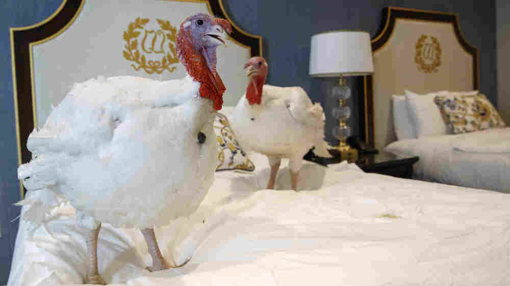 President Trump Pardons Pair Of Turkeys — The Strange Truth Behind The Tradition