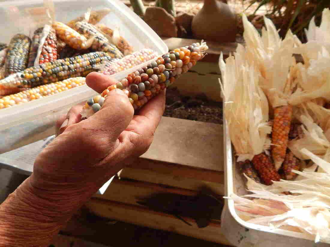 Westlake Legal Group corn1-d02c430fa4eee68c8da4546d77260e8306cbdacd-s1100-c15 Glass Gem Corn: Poster Child For The Return To Heirloom Seeds