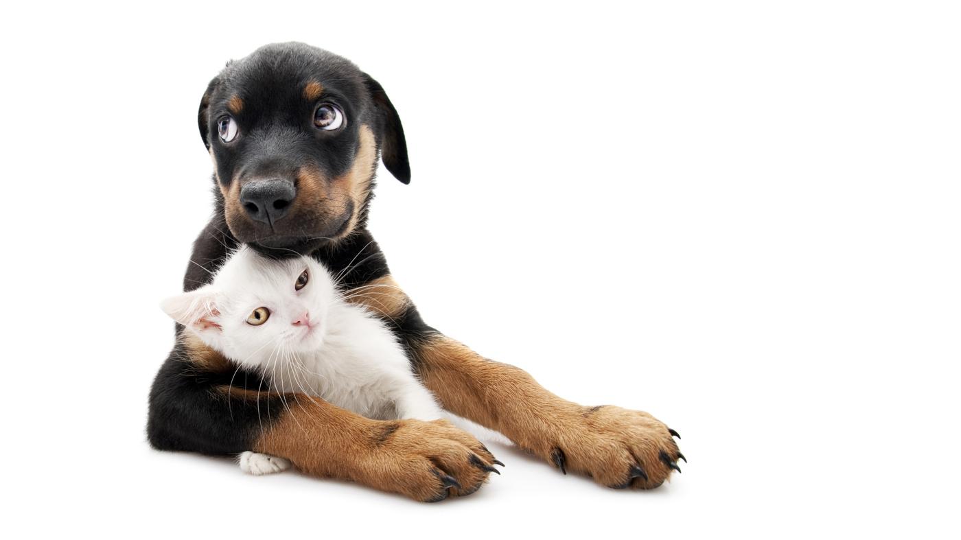 gettyimages 157610291 wide 725f56ca690907bdb6e0351e0c41c59c57f80a33 - New federal law bans animal cruelty. : NPR