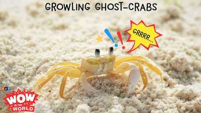 Growling Ghost-Crabs